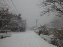 ここのたこ パート3  SUKIYAKISAKURA    Isigure Japan-CA3K1131.jpg