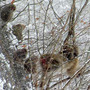 雪化粧した木々に群が…
