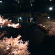 大田黒公園のライトア…