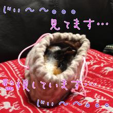 ☆さむさむ家☆-__.PNG