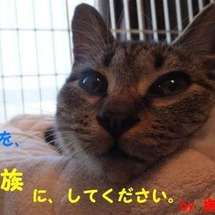 ● 4ヶ月仔猫 里親…
