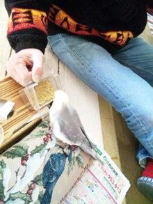 オカメインコのももちゃんと花教室と旅日記-121211_095434.jpg