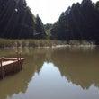 お池でボート