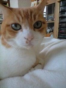 ずれずれブログ…湘南で猫と暮らせば…-080827_1435~0001.JPG