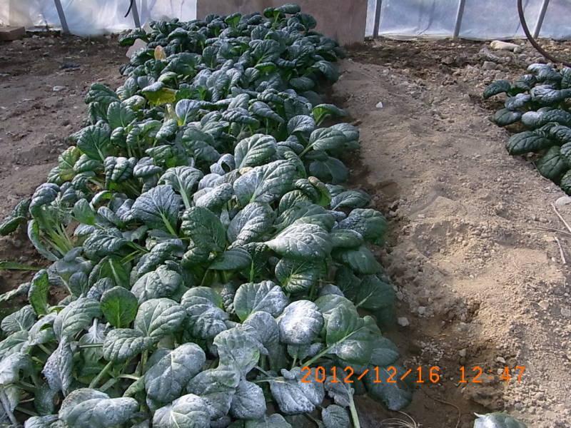 仙台の週末農業
