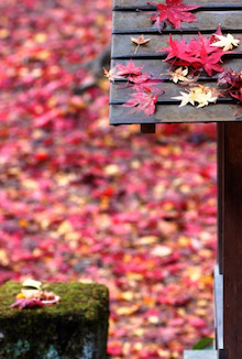 $「オキトモBOX」 ~阪神間で活動するライターの日常~