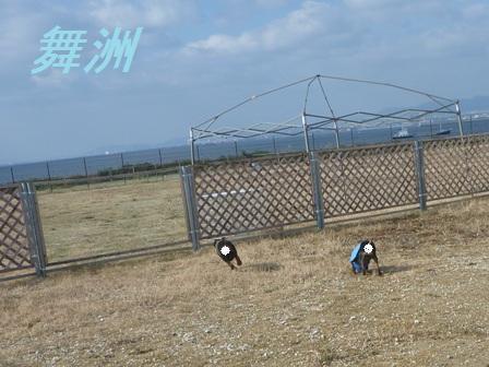 ミニピン☆テン&エース☆親子の愛とぼやき