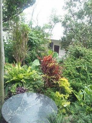 広野ゆうなのフーテンひぐらし-庭の木々