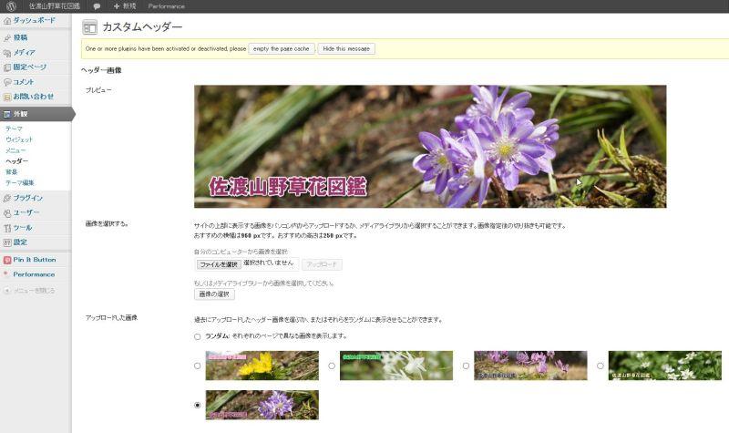 佐渡の洋食屋店長のブログ-山野草 ブログ