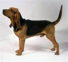 翻訳かけたら、犬種名がカオスになった!!