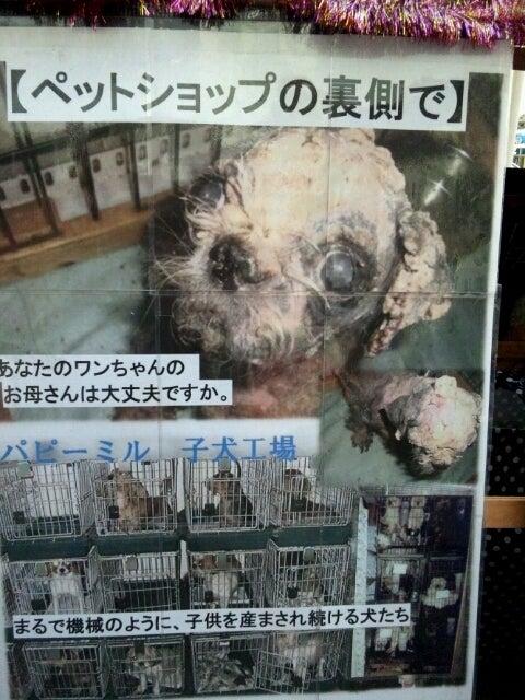 ペットショップ売れ残り犬を飼うメリットとリスク …