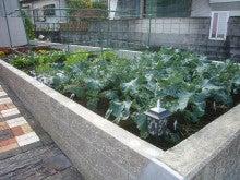 ログハウス・ビルドのブログ-菜園