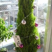 クリスマス 2012…