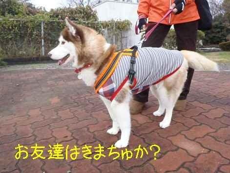 kenzzのブログ/ハスキー犬「リン姫」の成長日記
