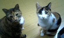 AHN MIKA オフィシャルブログ『Jewel of Lotus』Powered by Ameba-070325_003435_ed.jpg