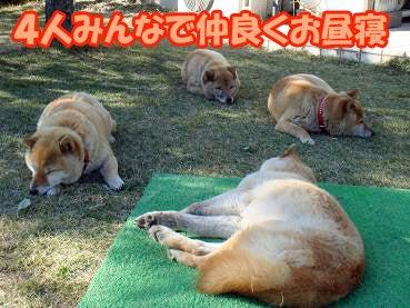 コーギー★プリモの日記