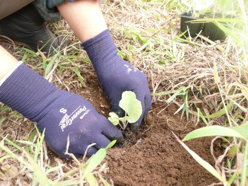 自然農とパーマカルチャーで楽しむ自給自足的ライフ-苗の定植