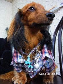 *King Of Dog*
