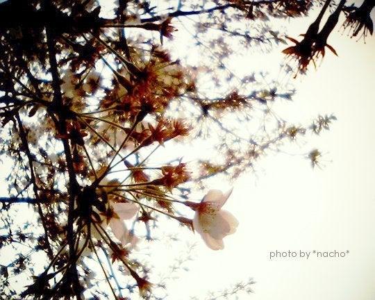 フォトブロ~*petite fleur*~-201212