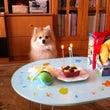 くぅ、三歳のお誕生日…