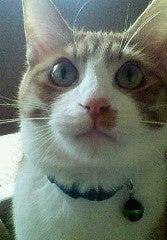 ねこネコ猫にゃんこ