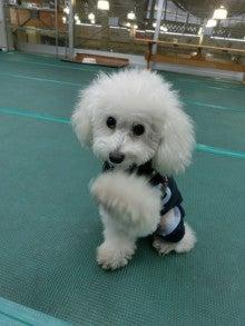 カインズホーム鶴ヶ島店 犬の学校goodone