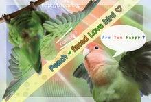 ようこそ!とりみカフェ!!~鳥カフェでの出来事や鳥写真~-コザクラインコ壁紙!