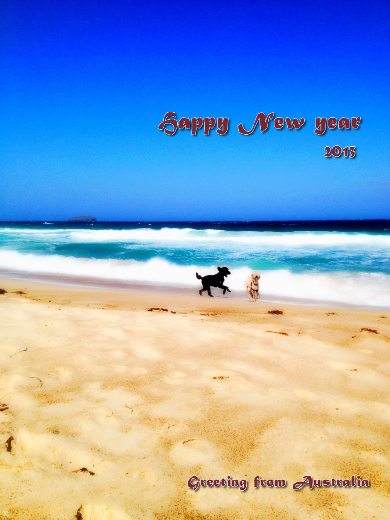 Two Dingo Night-happy_new_year_2013