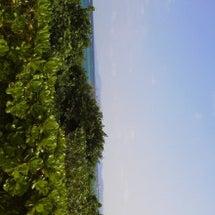 石垣島のお正月