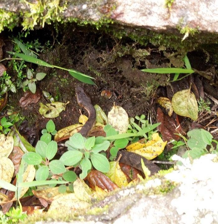 LA BODEGA PERUANA-マチュピチュの蛇