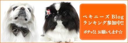 ペキニーズ Blog,白ペキニーズ シロ♂ 、白黒ペキニーズ クロ♀のフォトブログ,