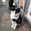 池上本門寺の野良猫と…