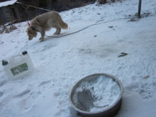NEWWAY.DogRescueのサポーターブログ