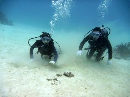 西表島ダイビング あべちゃん海ブログ  「にこにこダイビング」-ダイビング中