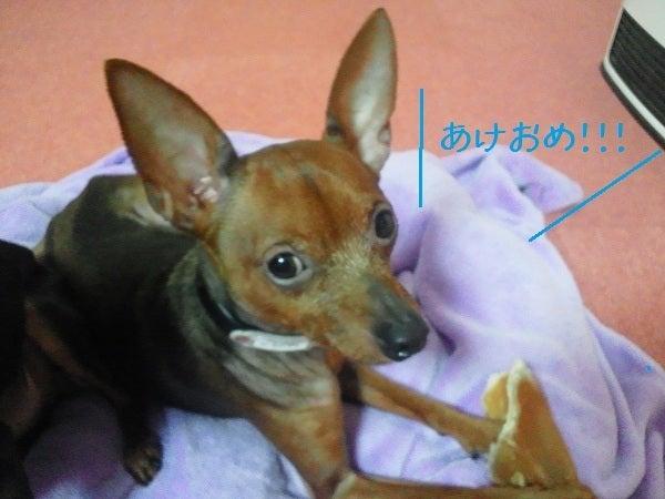 ミニピン!!! 大和!!! 武蔵!!!-2013.01.06-1