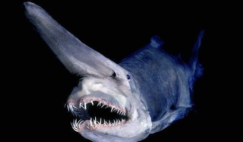 魚 変態 進化