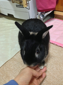 ちょぽころん&黒ちゃんの~きらめく笑いの彼方へ~-IMG_6685.jpg