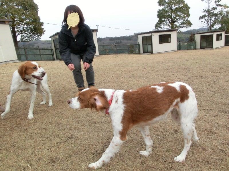 りこ&チャコのブログ-j7