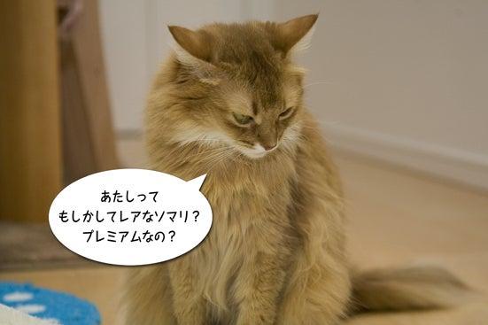 $ビュンビュン姫ちゃん暴走日記