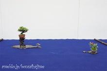 盆栽はじめました。/パン焼けました。