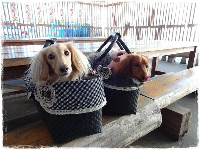 旅犬Lani&Leaのほほん風船記-なな輝