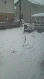 冬支度-F1010428.jpg
