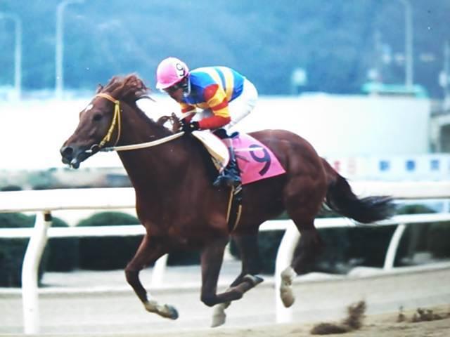 くろべえの馬旅福山競馬場に足跡を残したアラブ馬 ③コメント