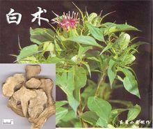 Xiang中医アロマセラピースクール