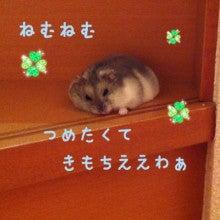 $まめたろう日記-image