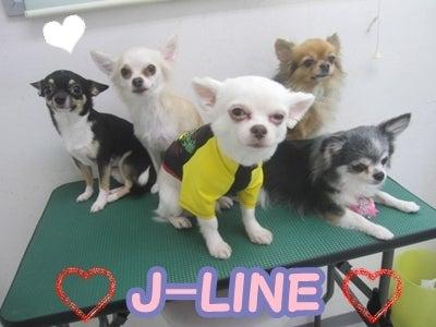 $ペットシッター&ペットホテル★ J-Line ★
