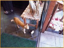 Kirin's Cafe  Style  /  カフェ・雑貨・グルメ & 街歩き-谷中 猫