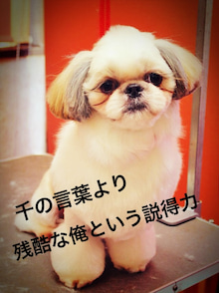 Trimming Salon  Dog Choice-__.JPG