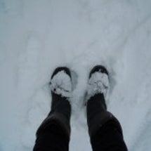 雪で動かぬ・・・