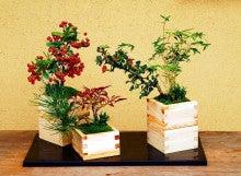 盆栽 清香園 スタッフブログ